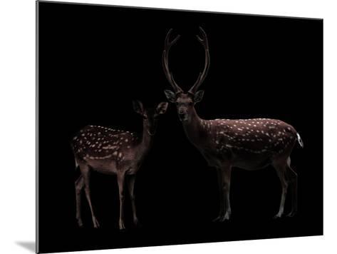 Deer, Dear--Mounted Photographic Print