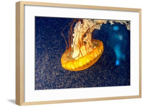 Orange Jellyfish on the Dark Background-Alex9500-Framed Art Print