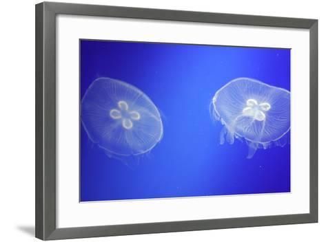 Floating Jellyfish-OliverHuitson-Framed Art Print