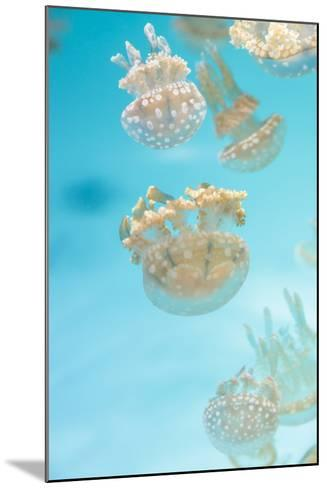 Spotted Lagoon Jelly, Golden Medusa, Mastigias Papua-steffstarr-Mounted Photographic Print