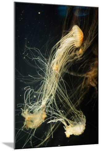 Jellyfish in the Ocean-alexandros33-Mounted Photographic Print