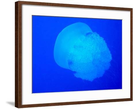 Giant Jellyfish-tonguy324-Framed Art Print