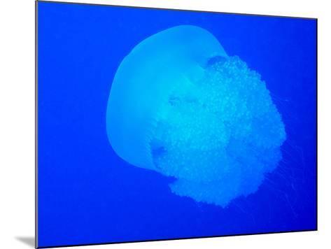 Giant Jellyfish-tonguy324-Mounted Photographic Print