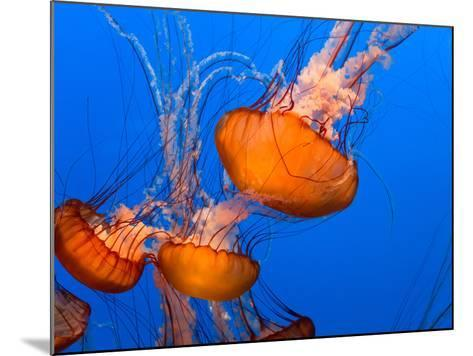 Jellyfish-topseller-Mounted Photographic Print