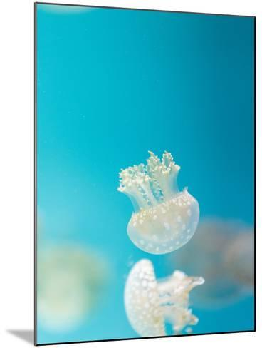 Spotted Lagoon Jelly, Golden Medusa-steffstarr-Mounted Photographic Print