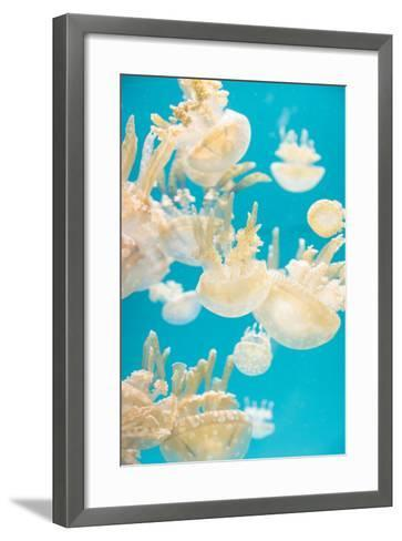 Spotted Lagoon Jelly, Golden Medusa, Mastigias Papua-steffstarr-Framed Art Print