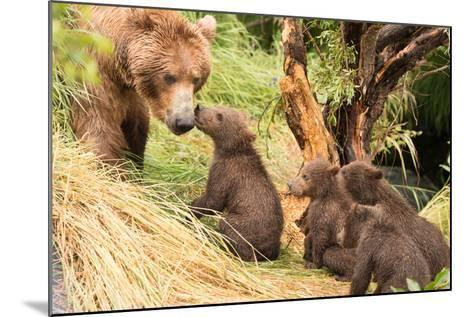 Four Bear Cubs Greet Mother beside Tree-Nick Dale-Mounted Photographic Print