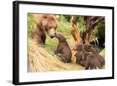 Four Bear Cubs Greet Mother beside Tree-Nick Dale-Framed Art Print