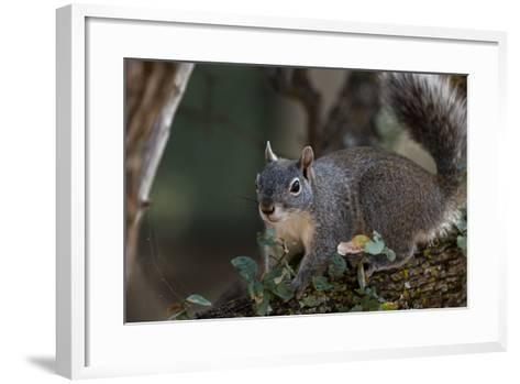 Silver - Gray Squirrel-wollertz-Framed Art Print