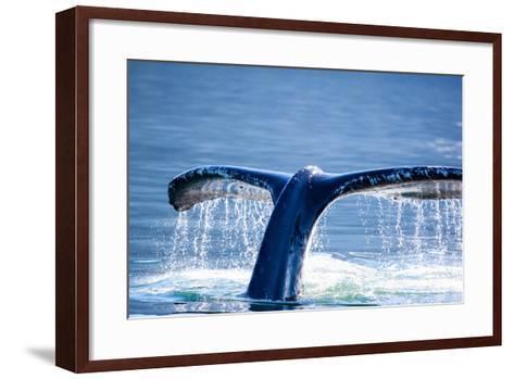 Humpback Whale Tail-JHVEPhoto-Framed Art Print