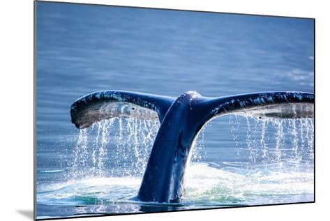 Humpback Whale Tail-JHVEPhoto-Mounted Photographic Print