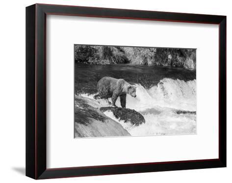 Brown Bear on Alaska-Andrushko Galyna-Framed Art Print