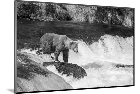 Brown Bear on Alaska-Andrushko Galyna-Mounted Photographic Print