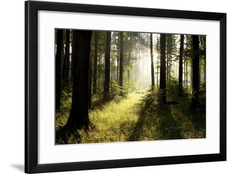Spring Deciduous Forest at Dawn-nature78-Framed Art Print