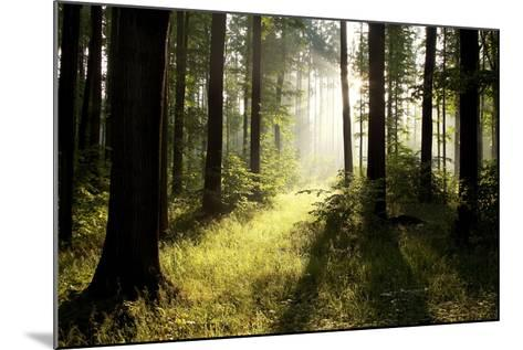 Spring Deciduous Forest at Dawn-nature78-Mounted Photographic Print