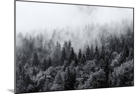 Misty Forests of Evergreen Coniferous Trees in an Ethereal Landscape with Low Laying Mist or Cloud-PlusONE-Mounted Photographic Print