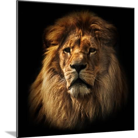 Lion Portrait on Black Background. Big Adult Lion with Rich Mane.-Michal Bednarek-Mounted Photographic Print