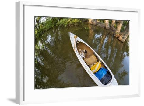 Corgi Dog in a Decked Expedition Canoe on a Lake in Colorado, a Distorted Wide Angle Fisheye Lens P-PixelsAway-Framed Art Print