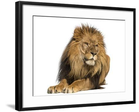 Lion Lying Down, Looking Away, Panthera Leo, 10 Years Old, Isolated on White-Life on White-Framed Art Print