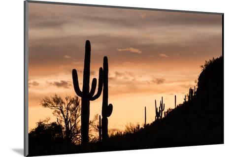 Saguaro Cactus-wollertz-Mounted Photographic Print