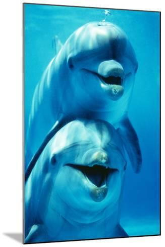 Bottlenose Dolphin Two, Facing, One on Top of the Other-Augusto Leandro Stanzani-Mounted Photographic Print