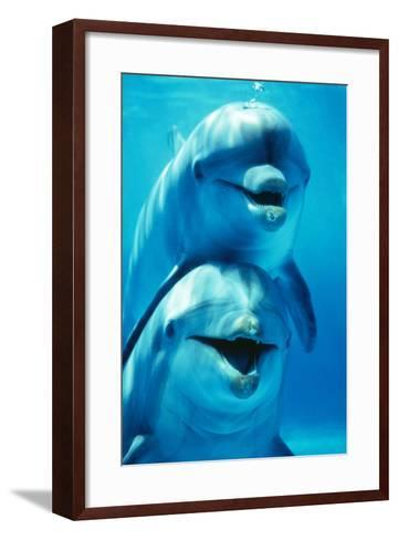 Bottlenose Dolphin Two, Facing, One on Top of the Other-Augusto Leandro Stanzani-Framed Art Print
