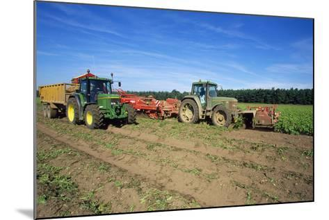 Farming Harvesting Potatoes--Mounted Photographic Print
