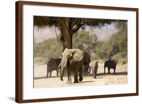 Desert Elephants, Family Finding Shade-Augusto Leandro Stanzani-Framed Art Print