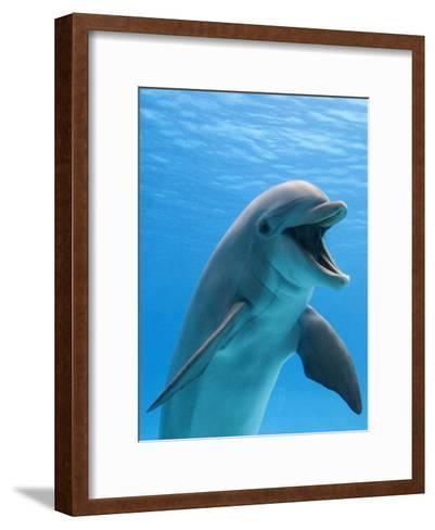 Bottlenose Dolphin Underwater-Augusto Leandro Stanzani-Framed Art Print