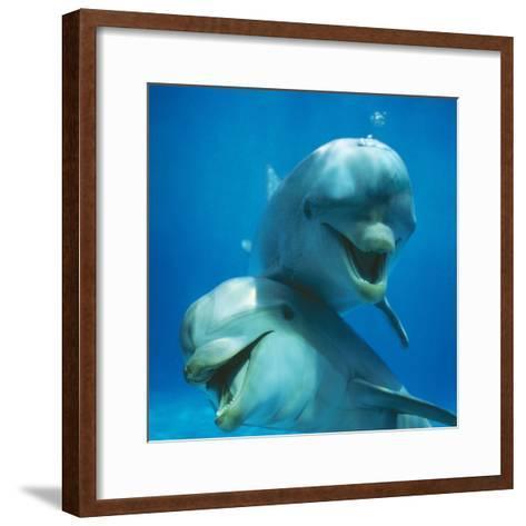Bottlenose Dolphin Two Facing Camera-Augusto Leandro Stanzani-Framed Art Print