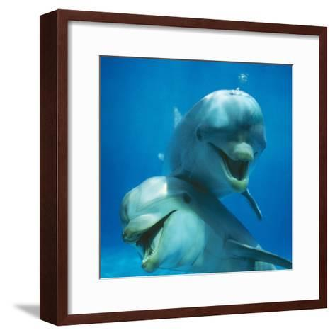 Bottlenose Dolphin Two Facing Camera-Augusto Leandro Stanzani-Framed Art Print