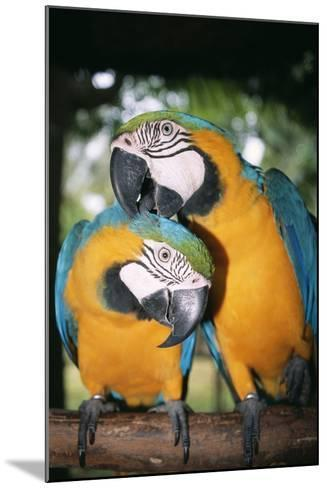 Blue and Yellow Macaws-Andrey Zvoznikov-Mounted Photographic Print