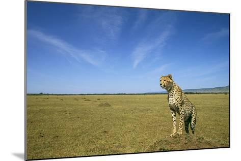 Cheetah Standing on Vantage Point--Mounted Photographic Print
