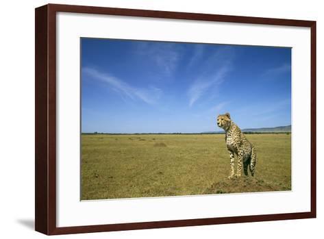Cheetah Standing on Vantage Point--Framed Art Print