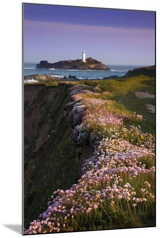 Godrevy Thrift in Flower--Mounted Photographic Print