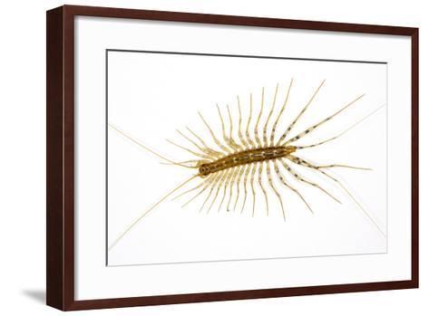 House Centipede on a Bedroom Wall--Framed Art Print