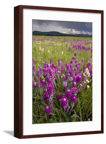 Intensely Flowery Mid-Altitude Prairie Grassland--Framed Art Print