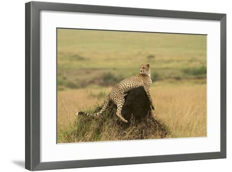 Cheetah Resting on Mound--Framed Art Print