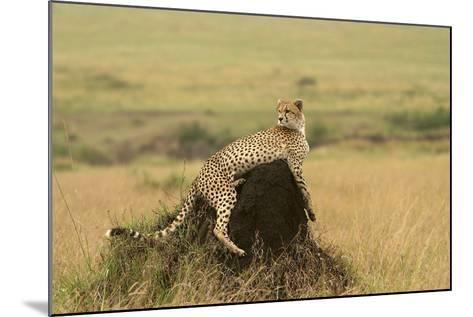 Cheetah Resting on Mound--Mounted Photographic Print