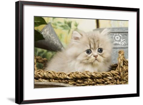 Blue Shaded Persian Kitten in Basket--Framed Art Print
