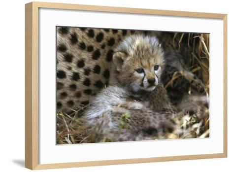 Cheetah Cub--Framed Art Print