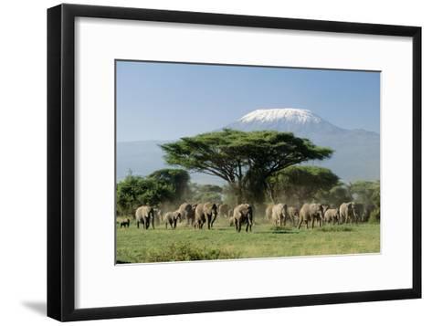 African Elephant Herd Infront of Mt, Kilimanjaro--Framed Art Print