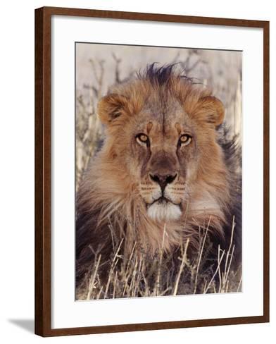 Lion--Framed Art Print