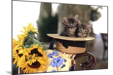 Kittens in Hat with Flowers--Mounted Photographic Print