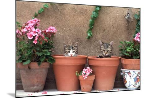 2 Kittens in Flowerpots--Mounted Photographic Print