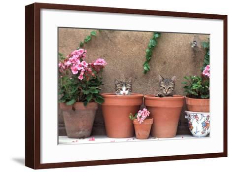 2 Kittens in Flowerpots--Framed Art Print