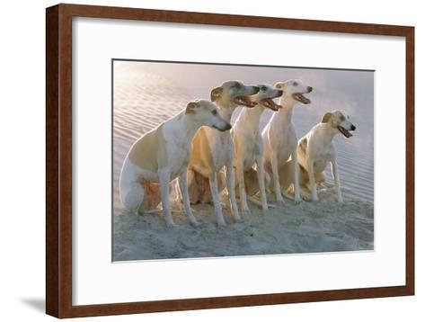 Whippets Group of Sandy Beach--Framed Art Print