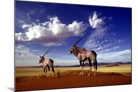 Gemsbok--Mounted Photographic Print