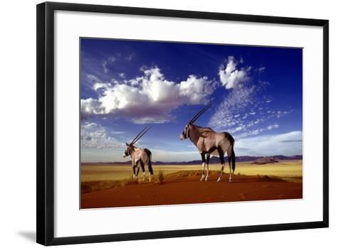 Gemsbok--Framed Art Print