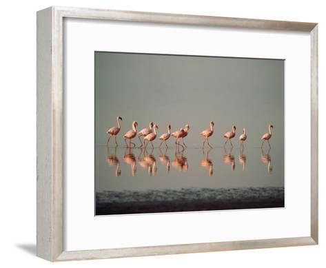 Lesser Flamingo Line of Eleven--Framed Art Print